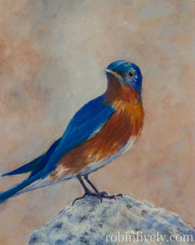 robin-lively-Bluebird